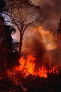 Slash and burn farming at Tekohaw, Alto Rio Guama Indigenous Reserve, Brazil - Photo by Campbell Plowden