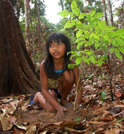 Kaapor girl planting tree sapling in forest patch degraded by illegal colonists near Xi'e, Alto Turiacu Indigenous Reserve, Brazil - Photo by Campbell Plowden/CACE