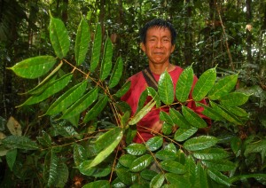 Bora man Aurelio and copal leaves. Photo by Campbell Plowden/Center for Amazon Community Ecology