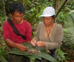 Bora man Aurelio and Yully Rojas picking larva out of copal resin lumps. Photo by Campbell Plowden/Center for Amazon Community Ecology