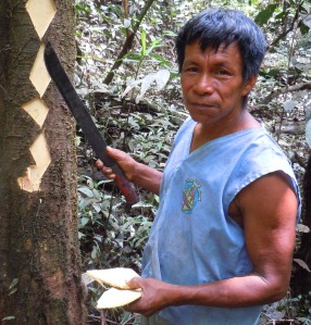 Bora man Aurelio with diamond cuts in huacamayo caspi bark for dye.  Photo by Campbell Plowden/Center for Amazon Community Ecology
