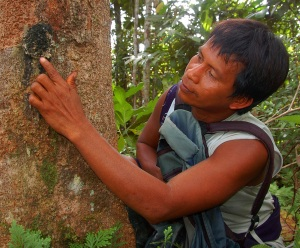 Bora woodsman Beder Tilley inspecting copal resin lump. Photo by Campbell Plowden/CACE