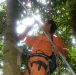 Brito collecting copal leaves with pole trimmer. Photo by Campbell Plowden/Center for Amazon Community Ecology