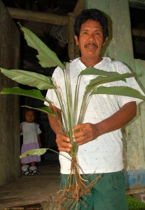 Bora man Gregorio with pucafisa dye plant. Photo by Campbell Plowden/Center for Amazon Community Ecology
