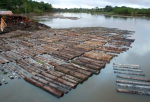 Logs at sawmill by small Amazon River town.  Photo by Campbell Plowden/CACE