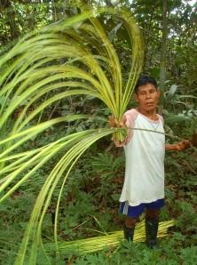 Lucio separating chambira leaves destined for craft making in Brillo Nuevo. Photo by Campbell Plowden/CACE