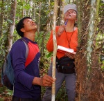 Yully Rojas and Beder Tilley count cogollos in chambira tree. Photo by Campbell Plowden/CACE