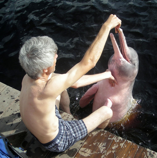 Campbell Plowden and Amazon river dolphin at Novo Airao, Brazil