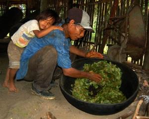 Brillo Nuevo curaca Manuel Ruiz toasting coca leaves