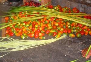 Pijuayo fruit and chambira palm fibers at Brillo Nuevo