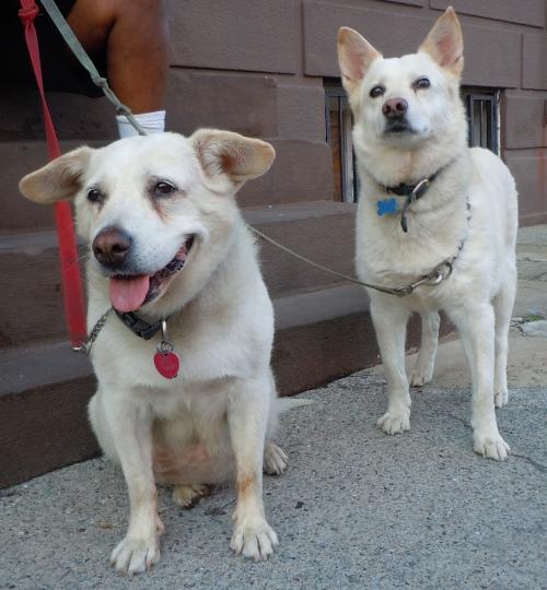 Chichi and Max