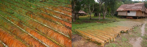 Irapay palm leaf crisnejas drying at Nueva Esperanza. Photos by C. Plowden/CACE