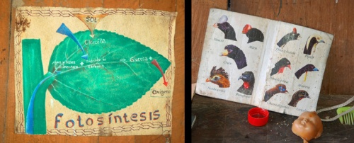 Photosynthesis poster and bird guide. Photos by C. Plowden/CACE