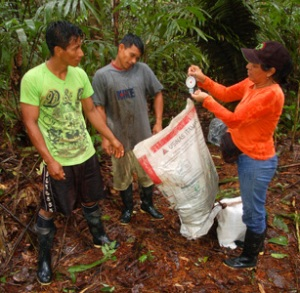 Yully Rojas weighing rosewood leaves