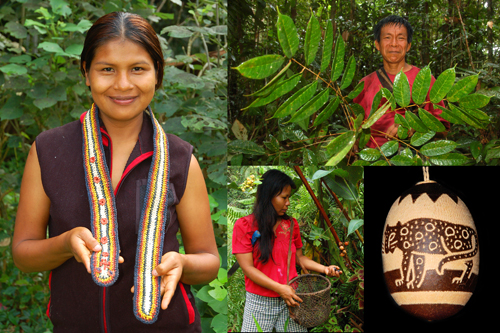 CACE Peru Project Global Giving Signature Photo ©Photos by Campbell Plowden/Center for Amazon Community Ecology