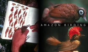 Margarita Tours Amazon birding expedtion. © Photo by Margarita Tours