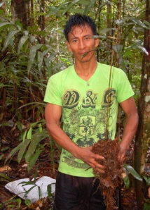 Bora man with rosewood seedling at Brillo Nuevo. ©Photo by Campbell Plowden/Center for Amazon Community Ecology