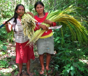 Bora women artisans with chambira palm leaves harvested for craft making. ©Photo by Campbell Plowden/Center for Amazon Community Ecology