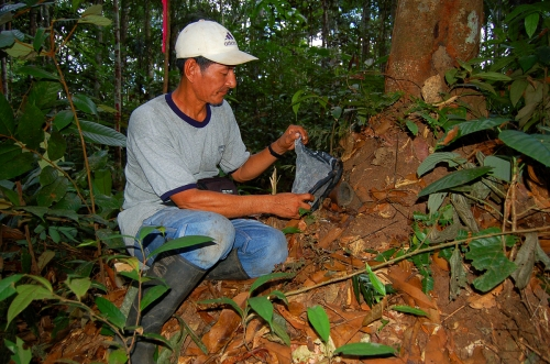 Capturing samples of stingless bees at Jenaro Herrera. Photo by Campbell Plowden/Center for Amazon Community Ecology