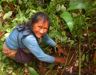 Alejandrina Lopez planting chambira. Photo by Campbell Plowden/Center for Amazon Community Ecology