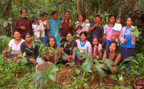 Bora women at chamibra planting.  Photo by Campbell Plowden/Center for Amazon Community Ecology