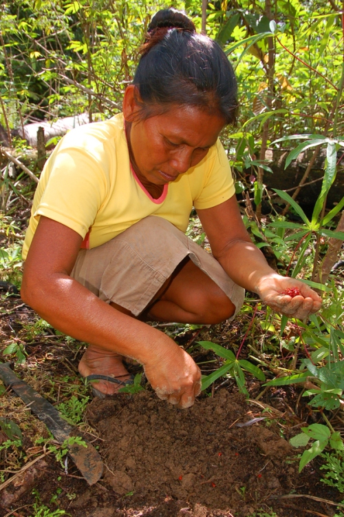 Graciela planting achiote seeds. Photo by Campbell Plowden/Center for Amazon Community Ecology