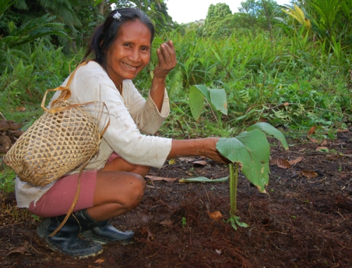 Hermelinda Lopez planting guisador. Photo by Campbell Plowden/Center for Amazon Community Ecology