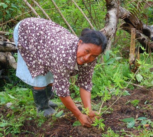 Hilda Campos planting sisa dye plant. Photo by Campbell Plowden/Center for Amazon Community Ecology