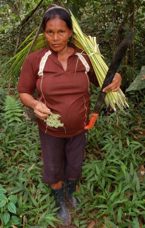 Lidaberna Panduro carrying chambira leaves. Photo by Campbell Plowden/Center for Amazon Community Ecology