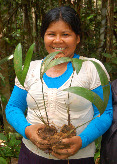 Lucila Flores with chamibira seedling. Photo by Campbell Plowden/Center for Amazon Community Ecology