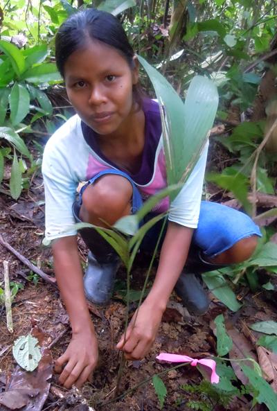 Maria Roque planting chambira. Photo by Gisela Ruiz/Center for Amazon Community Ecology