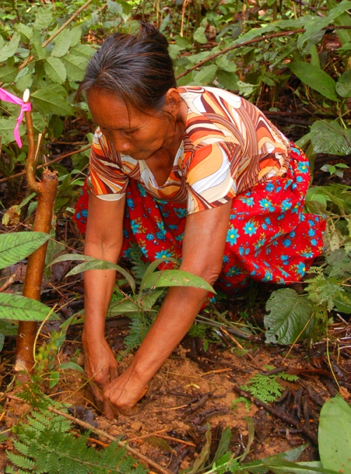 Raquel Lopez planting chambira seedling. Photo by Campbell Plowden/Center for Amazon Community Ecology