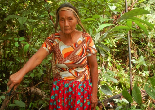 Raquel Lopez with chambira seedlings. Photo by Campbell Plowden/Center for Amazon Community Ecology