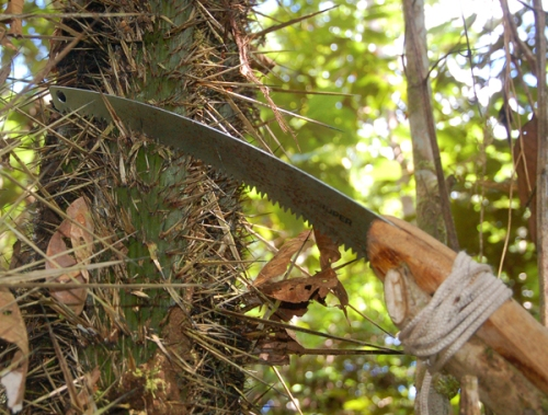 Sawing chambira stem. Photo by Campbell Plowden/Center for Amazon Community Ecology