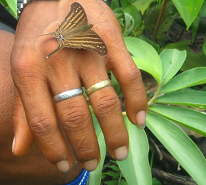 Brown butterfly on hand with rings at Brillo Nuevo. Photo by Center for Amazon Community Ecology