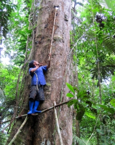 Collecting high copal resin lump near Brillo Nuevo. Photo by Yully Rojas/Center for Amazon Community Ecology