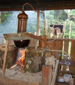 Distilling copal leaves with copper alembique pot. Photo by Campbell Plowden/Center for Amazon Community Ecology
