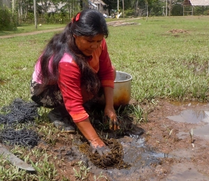 Bora artisan Lucila Flores dying chambira with suelda con suelda and mud. Photo by Campbell Plowden/Center for Amazon Community Ecology