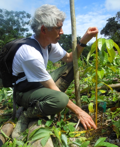 Campbell Plowden measuring rosewood seedling at Brillo Nuevo. Photo by Center for Amazon Community Ecology