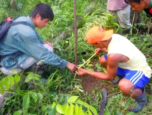 Luke Plowden and Bora man measuring rosewood seedling at Brillo Nuevo. Photo by Campbell Plowden/Center for Amazon Community Ecology