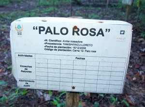 Palo Rosa sign at IIAP herbarium in Pucallpa. Photo by Campbell Plowden/Center for Amazon Community Ecology
