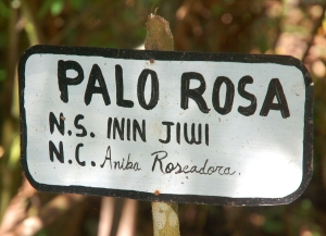 Palo Rosa sign with Shipibo and scientific name at Recover center.  Photo by Campbell Plowden/Center for Amazon Community Ecology
