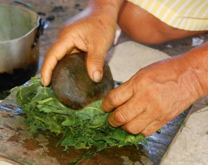 Pounding cocona leaf with rock. Photo by Campbell Plowden/Center for Amazon Community Ecology
