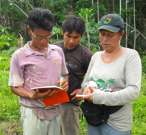 Yully Rojas and Bora team recording rosewood seedling growth. Photo by Campbell Plowden/Center for Amazon Community Ecology