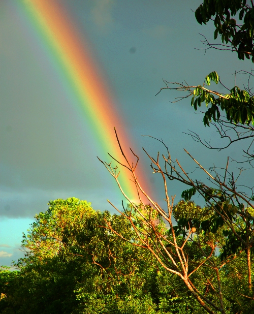 Rainbow over forest on Tahuayo River. Photo by Campbell Plowden/Center for Amazon Community Ecology