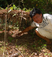 Rosewood seedling and RECOVER staff. Photo by Campbell Plowden/Center for Amazon Community Ecology