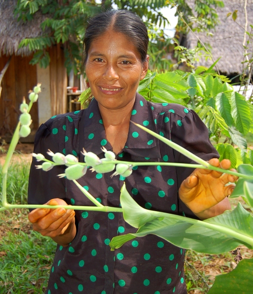 Campesino artisan with achira plant. Photo by Campbell Plowden/Center for Amazon Community Ecology