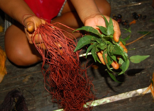 Sisa (Arrabidaea spp.) leaves and sisa dye chambira fiber.  Photo by Campbell Plowden/Center for Amazon Community Ecology