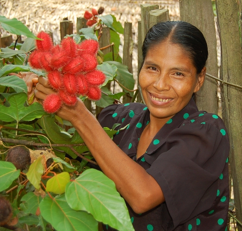 Artisan holding achiote pods in her garden. © Photo by Campbell Plowden/Center for Amazon Community Ecology