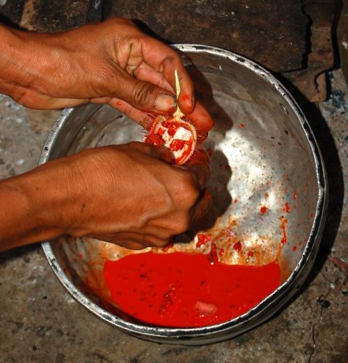 Artisan removing red oil from achiote seeds to dye chambira fiber. © Photo by Campbell Plowden/Center for Amazon Community Ecology